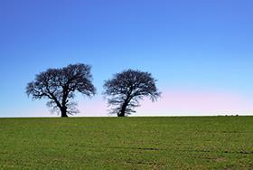 Harworth sells four parcels of restored agricultural land